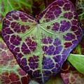 Heart Leaf by Patricia Strand