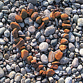 Heart Of Stones by Charles Harden