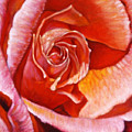 Heart Of The Rose by John Lautermilch