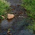 Heart Of The Stream by Pamela Walton