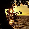 Heart Of The Sunset by Pamela Walton