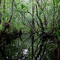 Heart Of The Swamp by Barbara Bowen