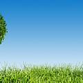 Heart Shape Tree On Green Grass Field by Michal Bednarek