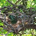Heart-shaped Nest by Emily Kelley