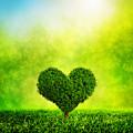 Heart Shaped Tree Growing On Green Grass by Michal Bednarek