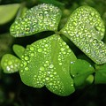 Heart Shaped With Water Drops by Jeff Swan