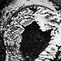 Heart Toadstool by Tonya Cooper