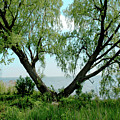 Heart Tree On Lake Saint Clair by LeeAnn McLaneGoetz McLaneGoetzStudioLLCcom
