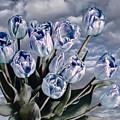 Heavenly Blue by Joachim G Pinkawa