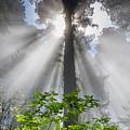Heaven's Light by Greg Nyquist