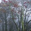 Heavy Mist by Cindy Gacha