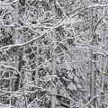 Heavy Snow by Bradley J Nelson