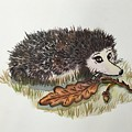 Hedgehog  by Aysel Mekhtieva