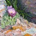Hedgehog Cacti by Debra Mickelson