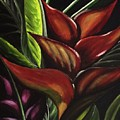 Heliconia Flower by Kim Selig