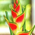 Heliconia Flower by Teresa Zieba