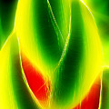 Heliconia Stem In Costa Rica by Hans Schrodter