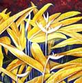 Heliconia by Usha Shantharam