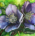 Helleborous Blue Lady by Karin  Dawn Kelshall- Best