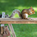 Hello Are You Gonna Eat All That? Chipmunk And Squirrel by Terry DeLuco
