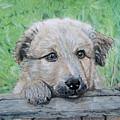 Hello Puppy by Yvonne Johnstone