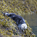 Hello Sea Otter by Chris Scroggins
