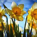 Hello Spring by Cricket Hackmann