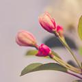 Hello Spring by Yvette Van Teeffelen