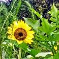 Hello Sunshine by Seaux-N-Seau Soileau