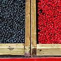 Helsinkian Berries by Stefan H Unger