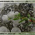 Hemlock In Bubbles by Doug Bratten