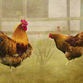 Hen Party Dancin The Night Away by Linsey Williams