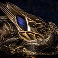 Hen Preening by David Rucker