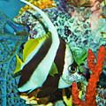 Heniochus Butterfly by Steven Parker