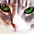 Her Emerald Eyes. Kitty Time by Jenny Rainbow