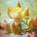 Herald Spring 8878 Idp_2 by Steven Ward