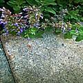 Herb Garden Walkway by RC DeWinter
