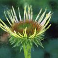 Herbaceous Beginning by Anita Faye