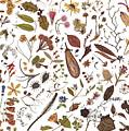 Herbarium Specimen by Rachel Pedder-Smith