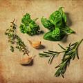 Herbs #011 by Hans Janssen