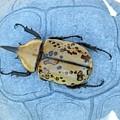 Hercules Beetle by Jeanne Kay Juhos