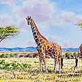 Herd Of Giraffe by Joseph Thiongo