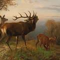 Herd Of Red Deer by Carl Friedrich Deiker