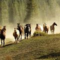 Herd Of Wild Horses by Scott Read