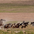 Herd On The Move by Kent Keller