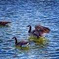 Herding Geese by Rrrose Pix
