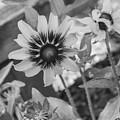 Here I Am In Black And White by Arlene Carmel