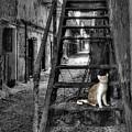 Here Kitty Kitty Kitty... by Evelina Kremsdorf