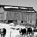 Hereford Barn Bw by Bonfire Photography