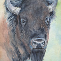 Here's Looking At You - Bison by Marsha Karle